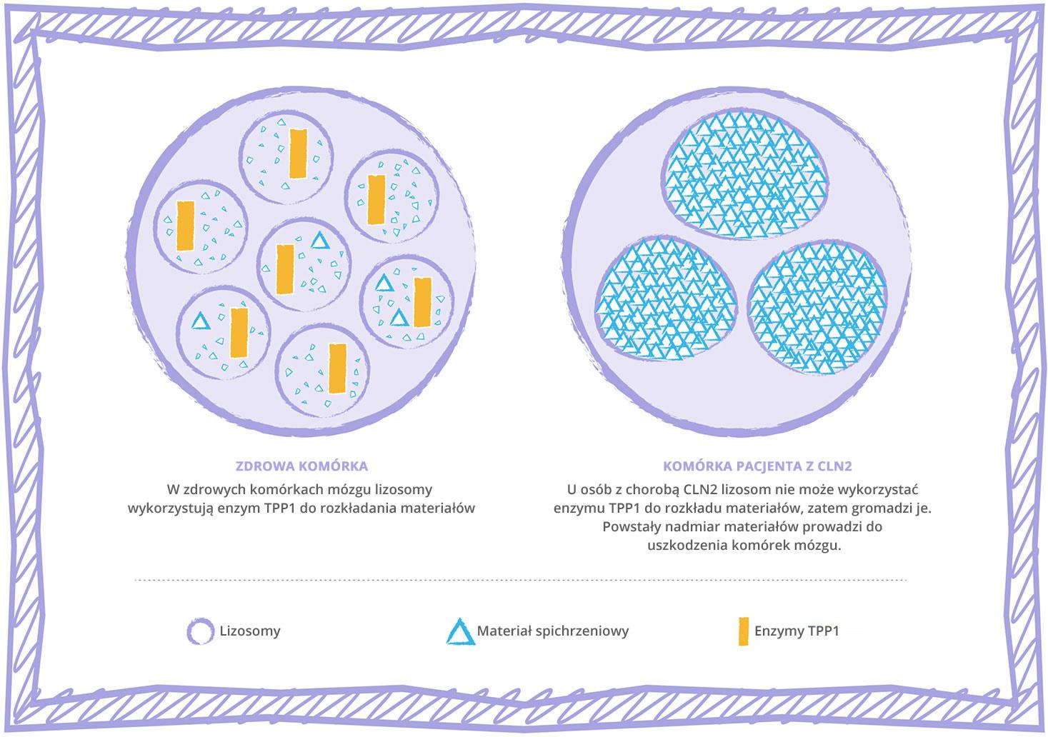 CLN2 disease lysosomal storage disorder cell graphic